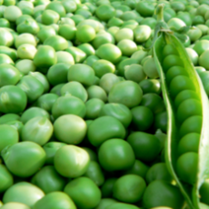 green-peas.png_350x350