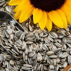 sunflower seeds -northfoods